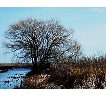 Point Pelee, Ontario Photographic Print
