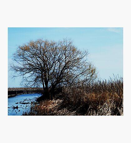 Point Pelee, Ontario Photographic Print
