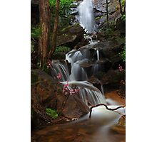 Cascade of the Hyacinth Orchid Photographic Print