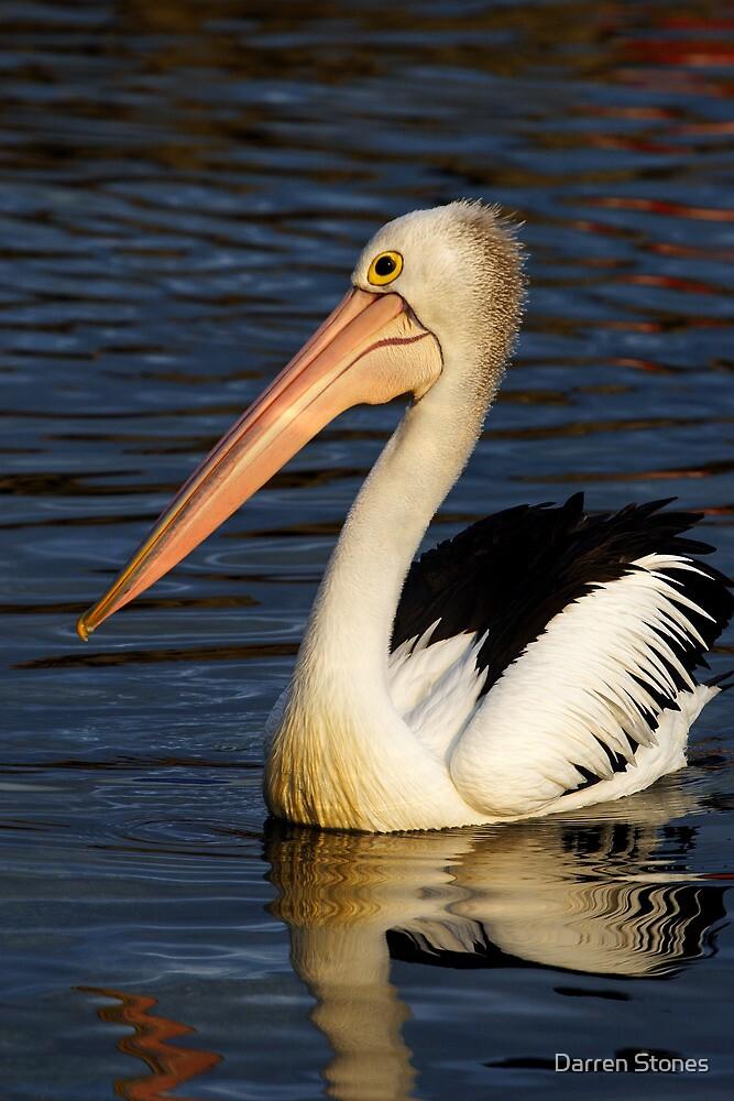 Pelican at Eden by Darren Stones
