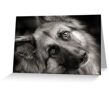A Shepherd Moment Greeting Card