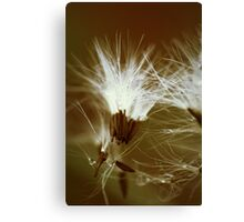 Now You See Me... Canvas Print