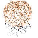 chrysanthemum by littlearty