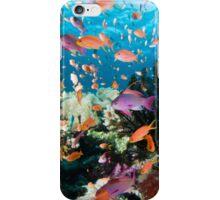 Fiji Aquarium iPhone Case/Skin