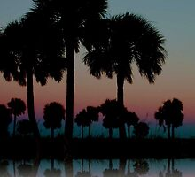 The Palms of Howard Park by wsweeks