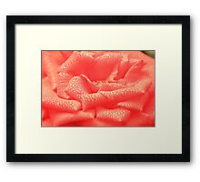Rose and Droplets Framed Print