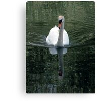 Swanning down the Great Ouse Canvas Print