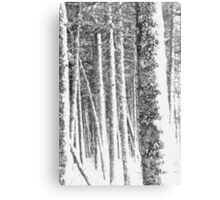 Winter Forest I Canvas Print