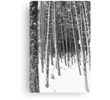 Winter Forest III Canvas Print