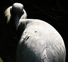 White Crane Seeks Enlightenment by dansLesprit