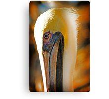 pelican, key west, florida Canvas Print