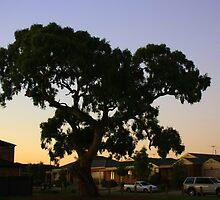 suburbian gum tree by fazza