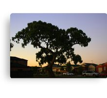 suburbian gum tree Canvas Print
