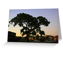 suburbian gum tree Greeting Card