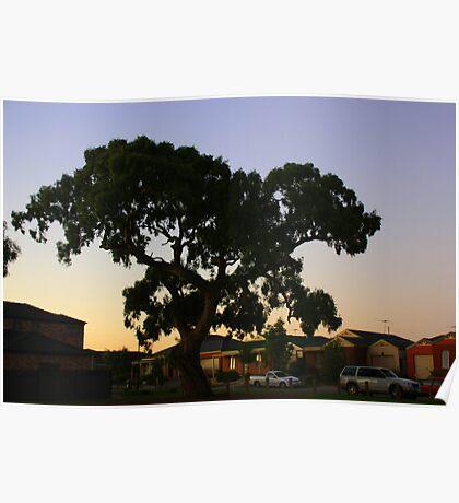 suburbian gum tree Poster
