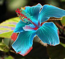 Hybrid Hibiscus by Rodney Fagan