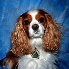 Cavalier King Charles In Perfection by daphsam