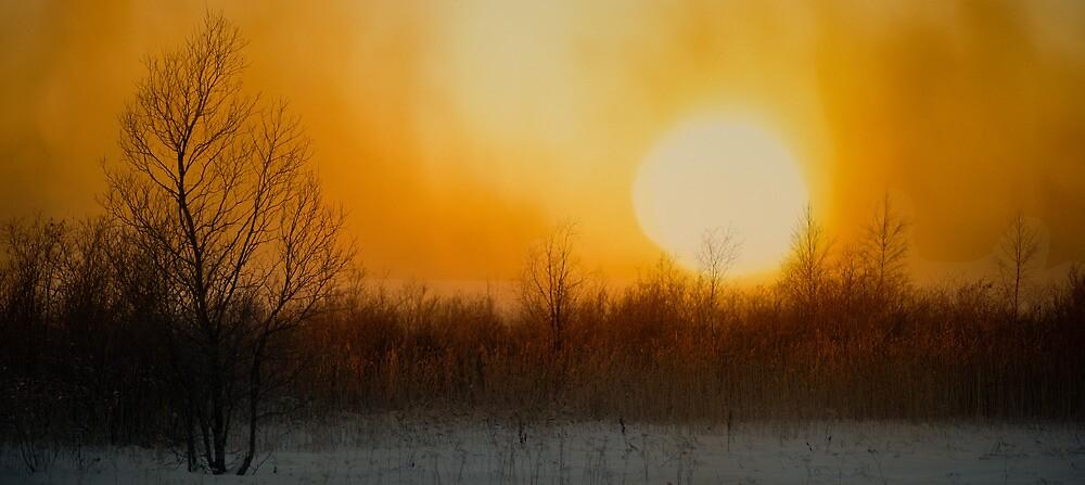 January Sunrise by finnarct