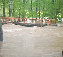 """""""2010 Tennessee Flood"""" by Doyle  McClung"""
