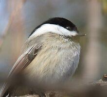 Sleepy Bird by Tracy Faught
