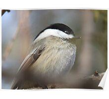 Sleepy Bird Poster