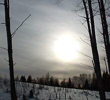 Winter Sun by Tracy Faught