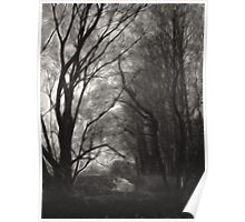 Trees by the creek Poster