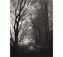 Trees by the creek Photographic Print