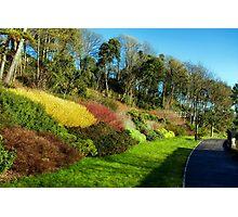 Winter Colours ~ Langmoor-Lister Gardens Photographic Print