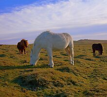 Dartmoor: Ponies on White Tor. by Rob Parsons