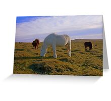 Dartmoor: Ponies on White Tor. Greeting Card