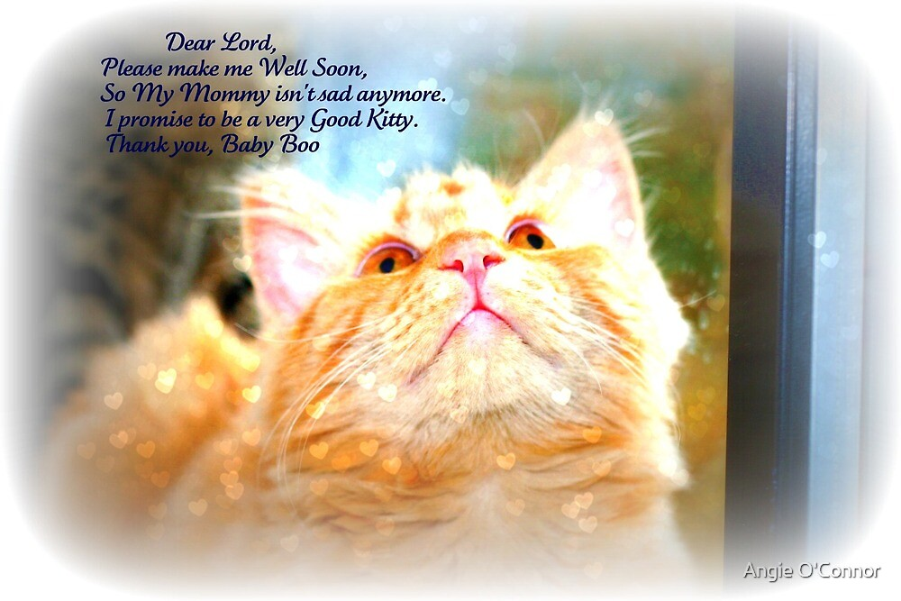 A Kitty's prayer by Angie O'Connor