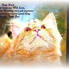 A Kitty's prayer by AngieBanta