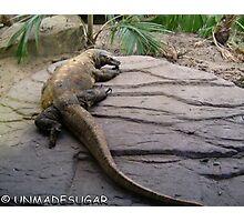 Rock Lizard Photographic Print