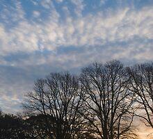 Misty morning No4 by StephenRB
