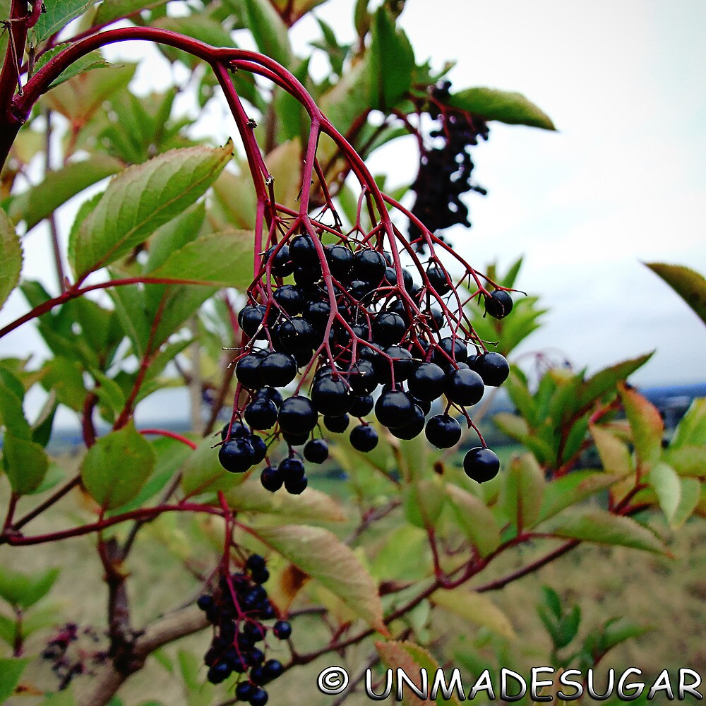 Dull Day Berries by unmadesugar