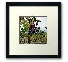 Dull Day Berries Framed Print