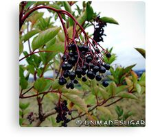 Dull Day Berries Canvas Print