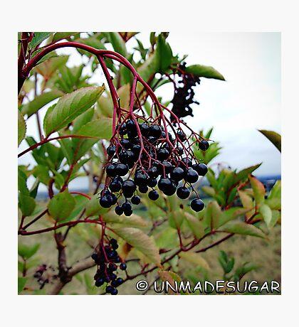 Dull Day Berries Photographic Print