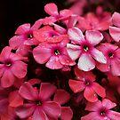 Pink Pattern by Igor Mazulev