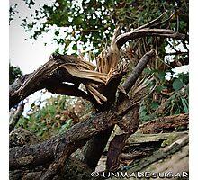 Wind Damage Photographic Print