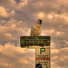 Polly Want A Ticket - Cockatoo, Avalon Beach Sydney by Philip Johnson