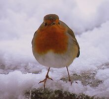 The Lake District: Windermere Robin 2 by Rob Parsons