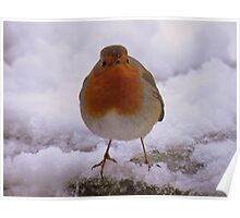 The Lake District: Windermere Robin 2 Poster