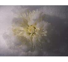 Frozen white Photographic Print