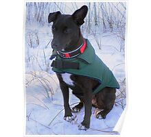 Terrier in the snow Poster