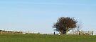 Lonely Hawthorn by WatscapePhoto