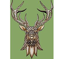 Brown Stag Photographic Print