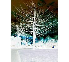 Tree Colour Creation Photographic Print