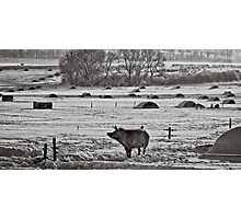Slices of winter # 2 Photographic Print